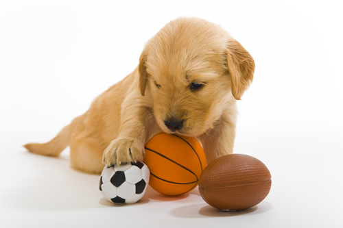 Puppy-with-sports-balls-121701822